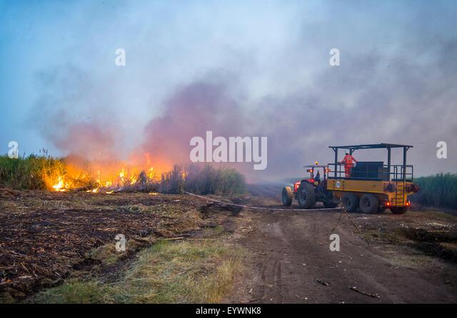 Burning sugar cane on a sugar estate, Nchalo, Malawi, Africa - Stock Image