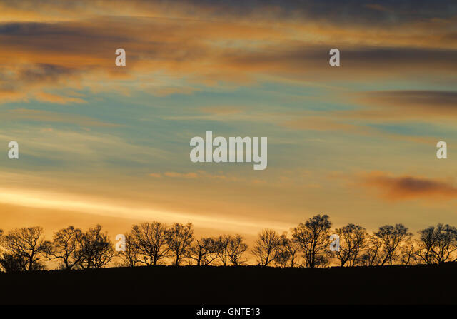 Colourful daybreak over a line of trees in silhouette against the sky - Stock Image
