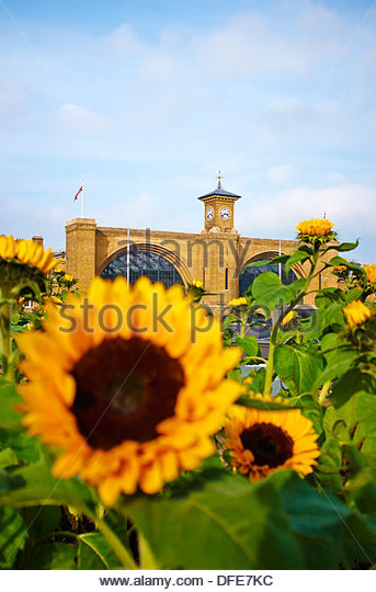 London In Bloom - Ian Drummond's 'Living With Nature' garden installation at St Pancras looking towards - Stock Image