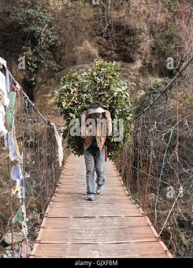 A Nepalese man carries branches on his back across a suspended bridge near Phakding, Nepal in Everest Base Camp - Stock Image