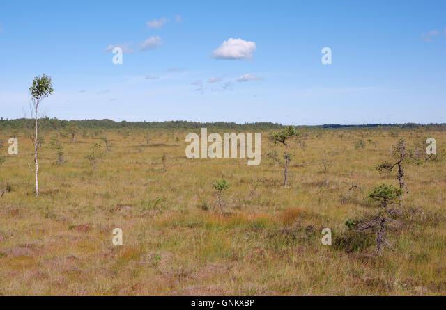 Rongu Bog. Sookuninga Nature Reserve. Pärnu county. Estonia. Baltic States.EU - Stock Image