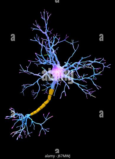 Computer artwork of a neuron. Neurons are responsible for passing information around the central nervous system - Stock-Bilder