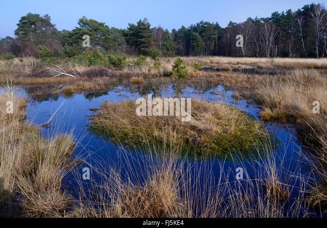 former peat exploitation at the Neustaedter Moor, Germany, Lower Saxony, Diepholzer Moorniederung, Neustaedter Moor - Stock-Bilder