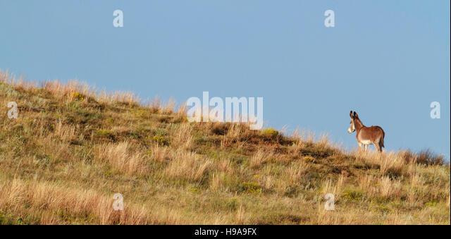Wild Donkey Stock Photos Amp Wild Donkey Stock Images Alamy