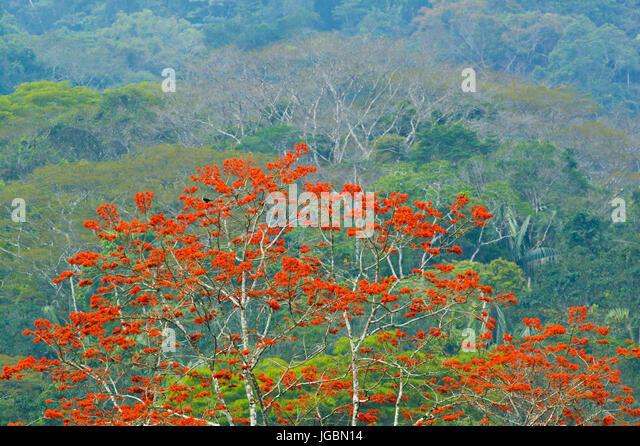 Rainforest at Cana field station in the Darien national park, Darien province, Republic of Panama. - Stock-Bilder