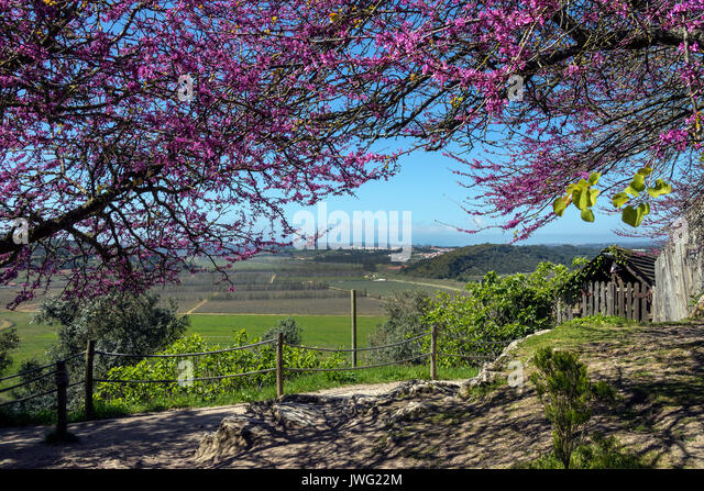 Portuguese countryside near the medieval walled town of Obidos in the Oeste region of Portugal. - Stock Image