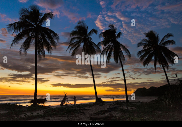 Palm trees at sunset on Playa Guiones surfing beach, Nosara, Nicoya Peninsula, Guanacaste Province, Costa Rica - Stock Image
