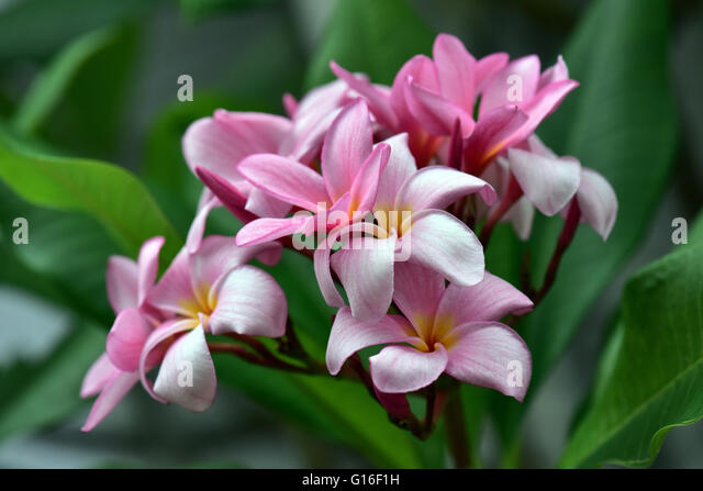 Blooming Beautiful Flowers - Stock Image