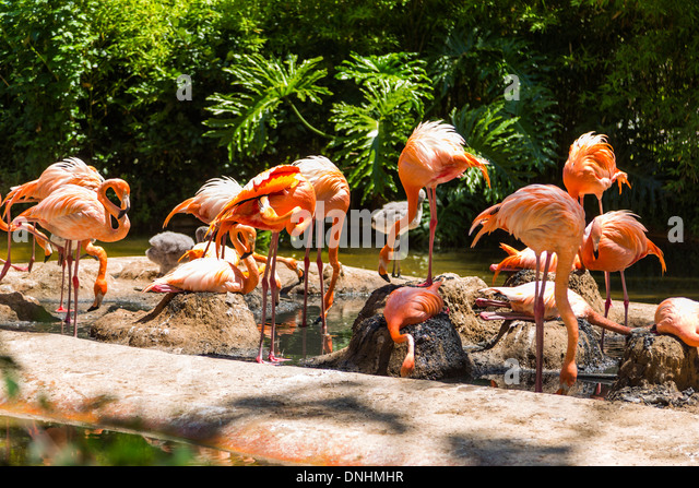Flock of flamingos in a zoo, Barcelona Zoo, Barcelona, Catalonia, Spain - Stock-Bilder