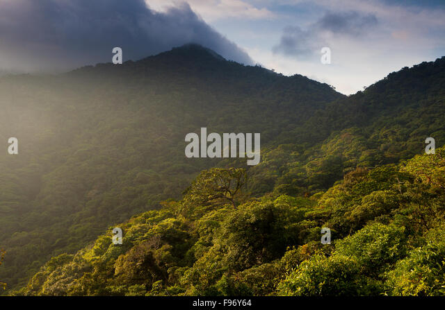 Last light in Omar Torrijos national park, Cocle province, Republic of Panama. - Stock-Bilder