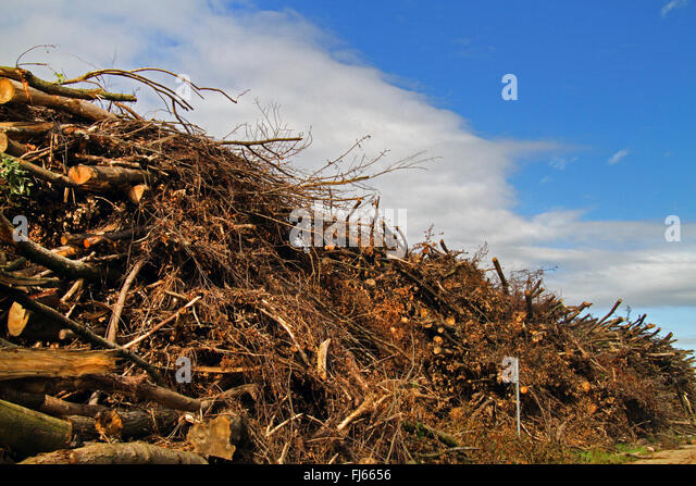 timber storage after deforestation, Germany - Stock Image