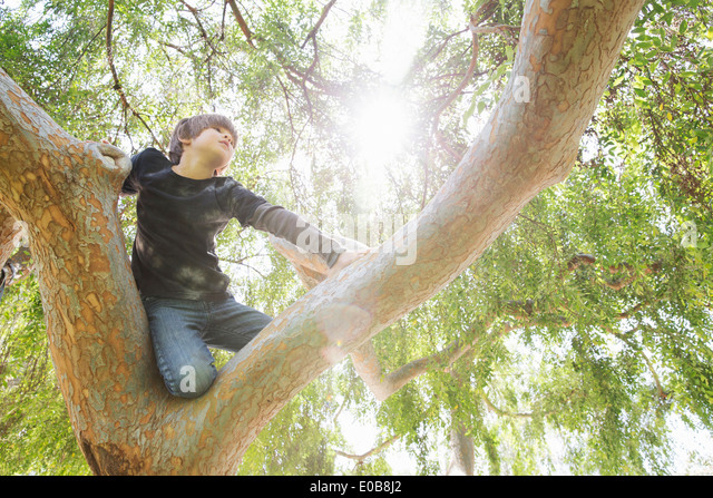 Boy hiding in sunlit tree gazing into distance - Stock Image
