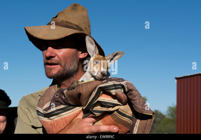 australia-nt-alice-springs-the-kangaroo-