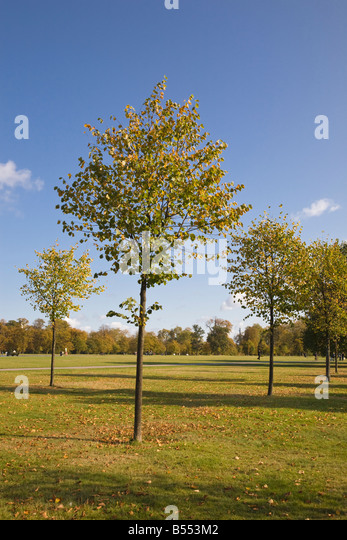 London parks stock photos london parks stock images alamy for Garden trees london