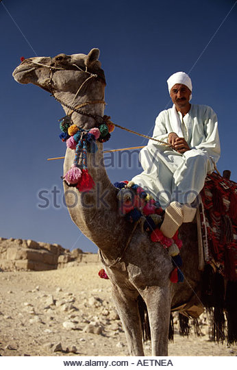 Egypt Cairo Giza District near Great Pyramid of Kheops built 2600 B.C. Seven Wonders of the World camel rides - Stock Image