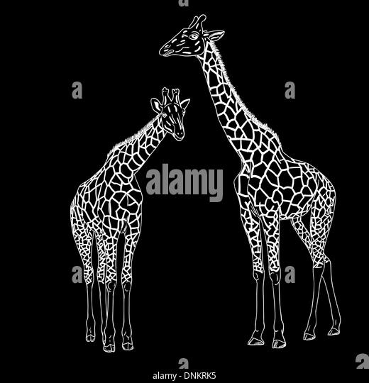 Two giraffes. Vector illustration. - Stock Image
