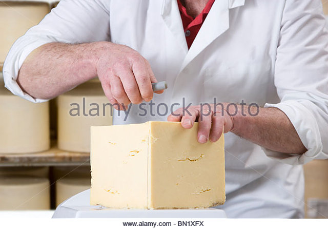 Close up of cheese maker cutting farmhouse cheddar with cheese wire - Stock Image