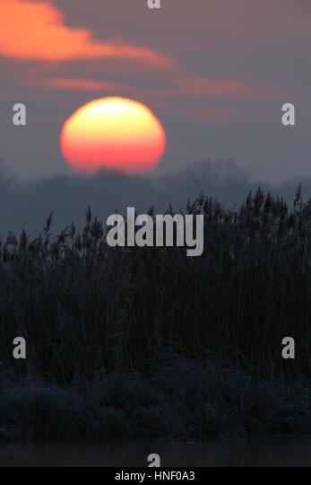 Sunrise over reed-lined shore, Leiner Lake, Middle Elbe Biosphere Reserve, Saxony-Anhalt, Germany - Stock Image