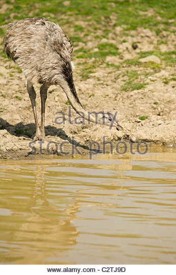 Drinking Muddy Water Book