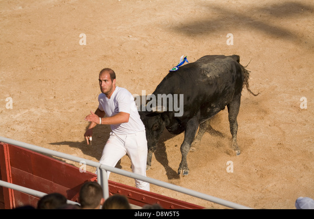 A man about to leap a fence while being chased by a charging bull in a bullfight in Arles, France - Stock Image