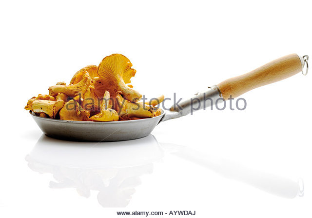 hymenomycetes stock photos hymenomycetes stock images alamy. Black Bedroom Furniture Sets. Home Design Ideas