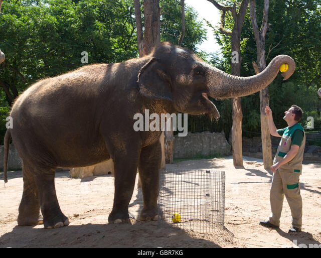 Stuttgart, Germany. 8th July, 2016. Zella the elephant holding a mini football featuring the Portuguese flag in - Stock Image