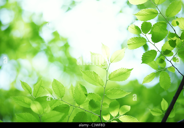 Green leaves against bright sky - Stock Image