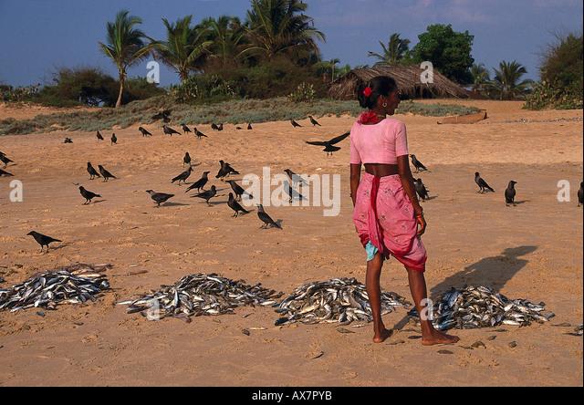 Fische sortieren, Baga Beach Goa, Indien - Stock-Bilder
