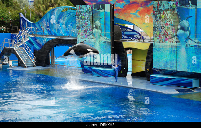 Killer whale show in shamu stock photos killer whale for Pool show orlando