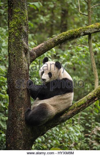 Dujiangyan Panda Base — Panda Keeper Program