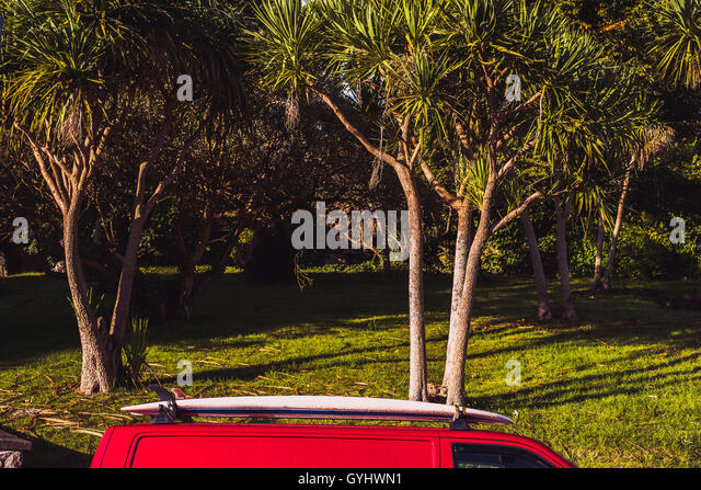 A red VW transporter van with a surfboard on a roof rack set against palm trees in Falmouth, Cornwall. 18th Sept - Stock Image
