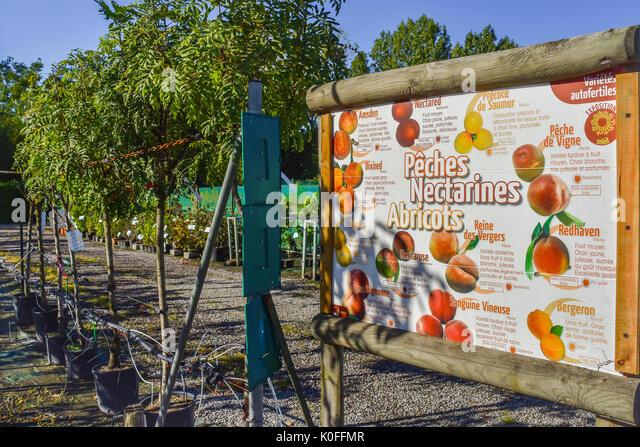 Plant nursery, France. - Stock Image