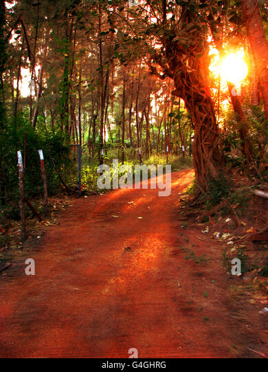 Tropical Sunset Path - Stock Image