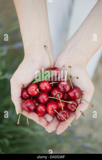 Hands full of delicious cherries - Stock Image