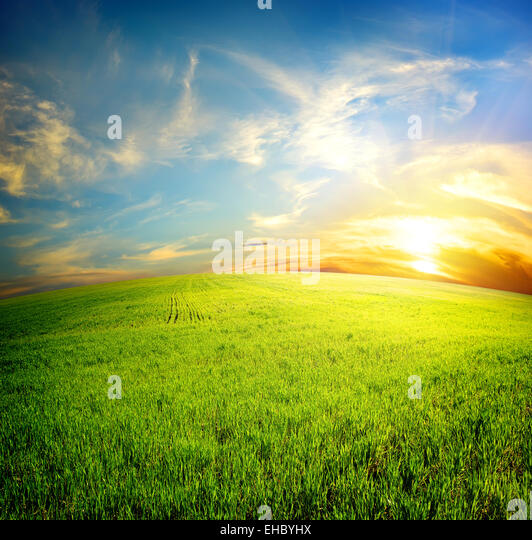Green field under beautiful clouds at sunrise - Stock Image