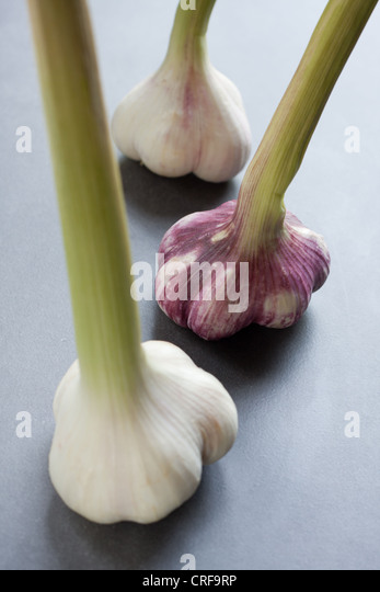 Fresh garlic bulbs - Stock Image