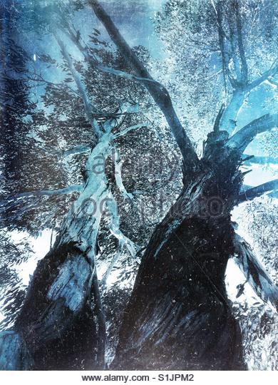 winter Trees - Stock Image