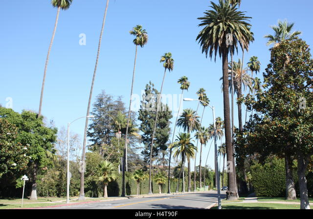 Palm trees in Los Angeles California - Hollywood Beverly Hills - Stock Image