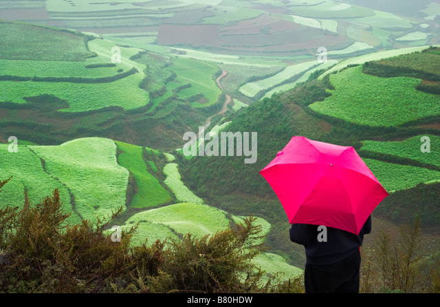 Tourist with red umbrella watch terraces of wheat and red soil in the mountain in morning mist Yunnan China - Stock-Bilder