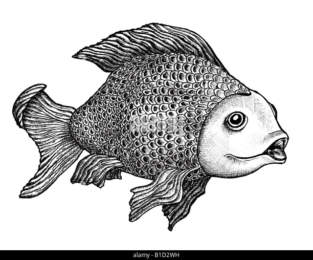 Ink drawing of a large carp with an enigmatic expression on her face - Stock Image