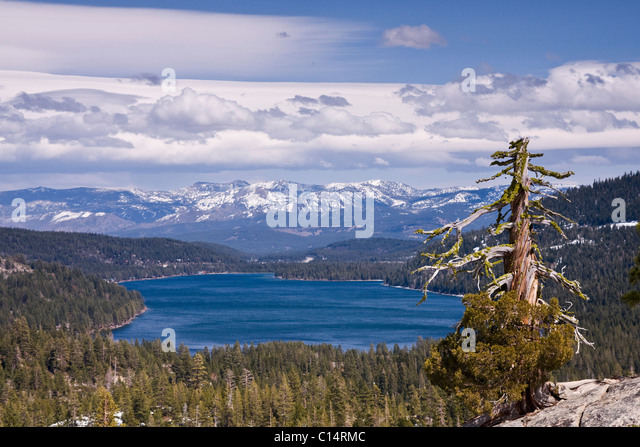 Donner Lake and the Sierra Mountains and a dead pine tree on a partly cloudy day in California - Stock Image
