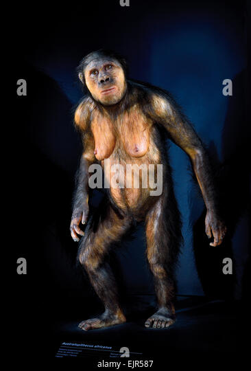 the evolution of homo erectus Homo habilis and homo erectus are two important species giving clear indications of how modern humans may have indeed evolved buzzle attempts to make a comparative analysis between the two species speaking of the evolution of the homininae species.