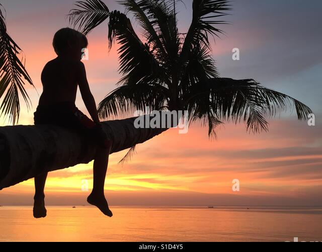 Silhouette of boy sitting on the palm tree with sunset background - Stock-Bilder