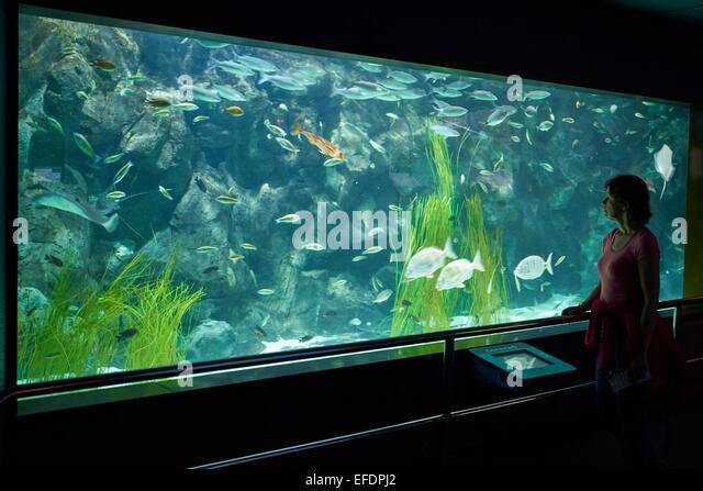 Aquarium in Loro Parque, Tenerife, Canary Islands, Spain - Stock Image