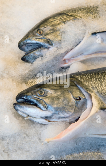 how to cook white chinook salmon