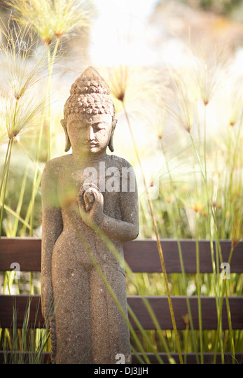 Tall grass around Buddha statue in sunny garden - Stock Image