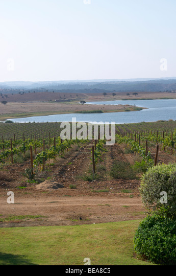 herdade do esporao alentejo portugal - Stock Image