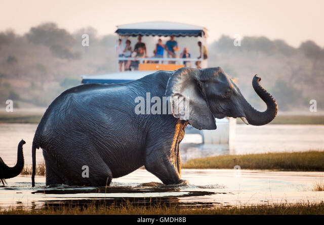 Tourist watching an elephant crossing a river in the Chobe National Park in Botswana, Africa; - Stock-Bilder