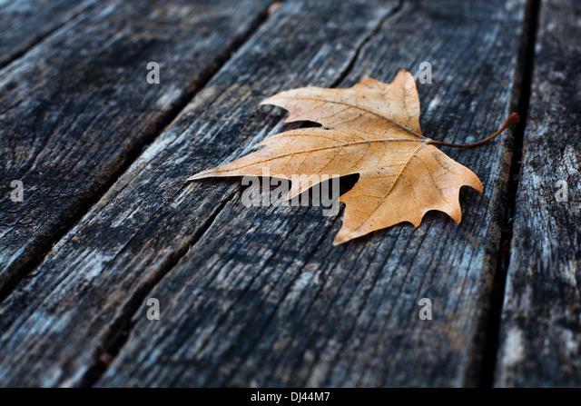 fall - Stock Image