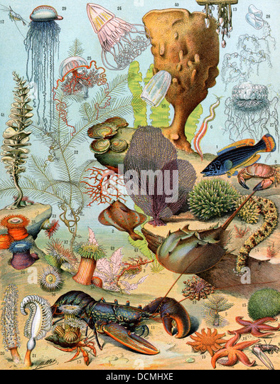 Life on the sea floor, including crustaceans and molluscs. - Stock Image